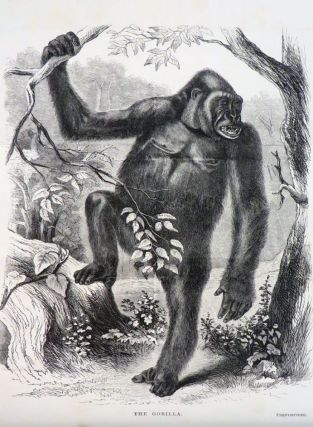 EXPLORATIONS AND ADVENTURES IN EQUATORIAL AFRICA. With Accounts of the Manners and Customs of the People, and of the Chace of the Gorilla, Crocodile, Leopard, Elephant, Hippopotamus, and Other Animals