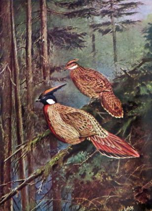 PHEASANTS THEIR LIVES AND HOMES