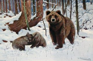 ANIMAL PORTRAITURE. With Fifty Studies in Full Colour Reproduced From the Original Paintings