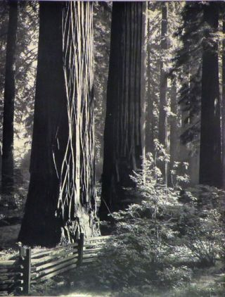 PAGEANT OF HISTORY IN NORTHERN CALIFORNIA. A Photographic Interpretation by Ansel Adams with text by Nancy Newhall