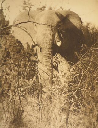 STALKING BIG GAME WITH A CAMERA IN EQUATORIAL AFRICA. With a Preface by Sir Sidney F. Harmer...Director of the British Museum (Nat. Hist.)