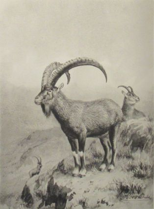 SPORTING TRIP THROUGH ABYSSINIA. A Narrative of a Nine Months' Journey from the Plains of the Hawash to the Snows of Simien, with a Description of the Game, From Elephant to Ibex, and Notes on the Manners and Customs of the Natives